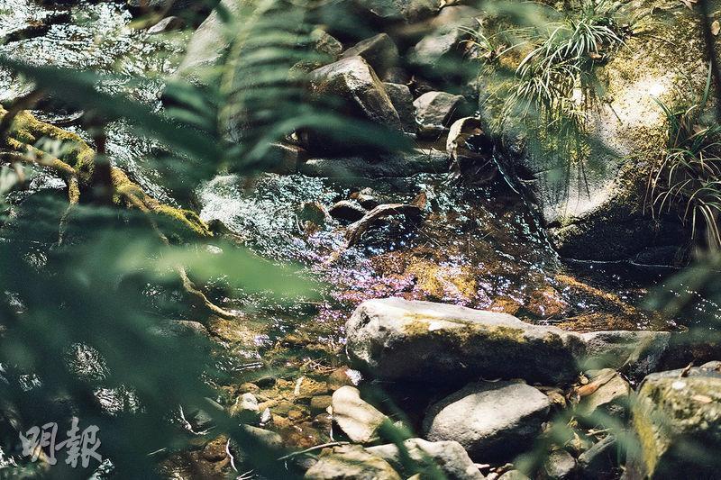 大自然之聲——研究發現聆聽大自然聲音,比冥想錄音更減壓。例如山溪流過的潺潺水聲,溫和順耳,在家中也可播放。(蘇智鑫攝)
