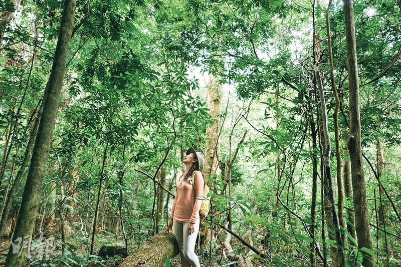 慢走山間 感受大自然 放鬆享受身心森林浴