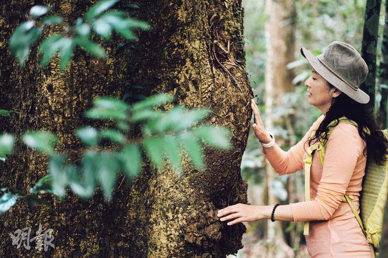 傾聽大樹——森林浴其中一個環節,是參加者憑着身體感覺,選擇走向一棵大樹,與它接觸,或簡單地在旁休息亦可。(蘇智鑫攝)