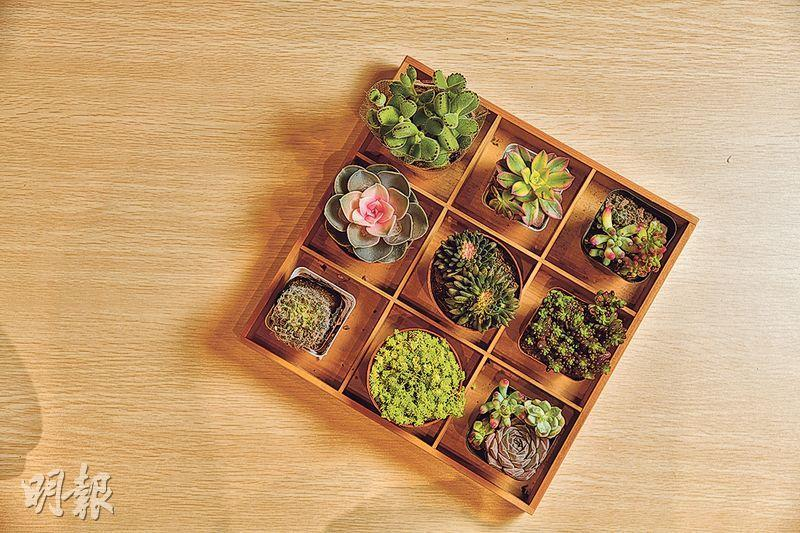 可愛「多肉」 打造玻璃庭園