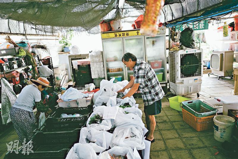黃零以膠袋分好蔬菜,然後在袋上掛上單據,方便送貨。(蘇智鑫攝)