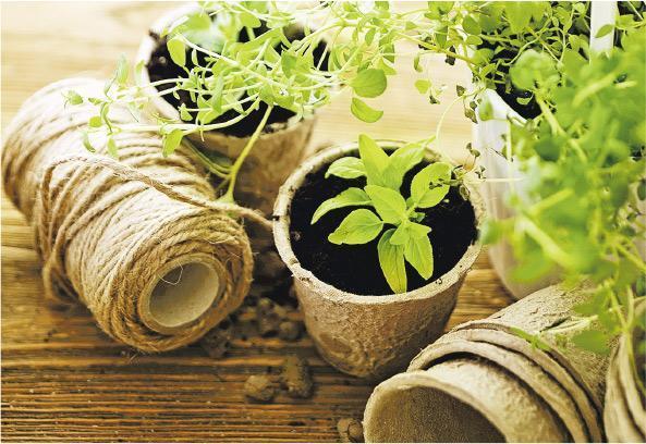 細觀盆栽——如果家中種有植物,Amanda建議大家可多留意它們。透過細微的觀察,甚至可看到植物每天長大的變化,見證大自然的生命力。(aerogondo@iStockphoto)