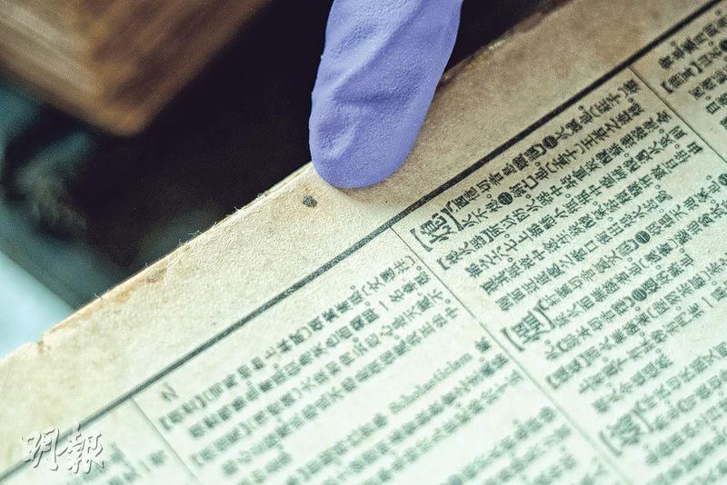 黑黴菌——Jennifer指黴菌多達400種,圖為香港常見的黑黴菌,對呼吸道健康構成威脅。(蘇智鑫攝)