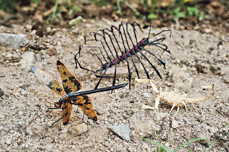 手織生物——Stony手織的小生物,一起「開派對」!左起是蜻蜒、蚰蜒及蠍子。蜻蜒較多停留在水邊,蚰蜒則愛住在舊屋,而蠍子則愛片狀岩混雜泥土的山坡及有草和灌木的地方。(楊柏賢攝