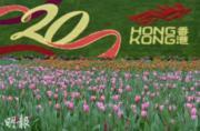 攝於維多利亞公園香港花卉展覽2017(蘇智鑫攝)