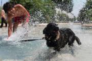 法國東部城市里昂有民眾帶小狗到水池玩水。(法新社)