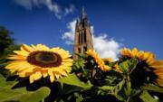 2017年7月,荷蘭Hilversum,太陽花 (法新社)