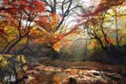 韓國紅葉:全羅北道 禪雲山