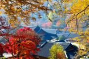 韓國紅葉:全羅南道 曹溪山松廣寺