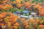 韓國紅葉:釜山梵魚寺