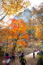韓國紅葉:慶尚北道 Juwangsan National Park