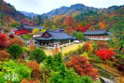 韓國紅葉:慶尚北道 Daeseungsa Temple
