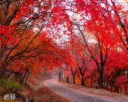 韓國紅葉:忠清南道 大田 Dulegil Trail