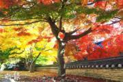 韓國紅葉:忠清南道 Magoksa Temple