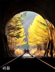 江原道鐵路單車(Rail Bike)