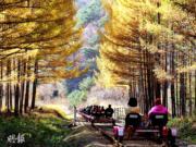 韓國紅葉:江原道鐵路單車(Rail Bike)