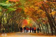 韓國紅葉:光州 Mudeungsan Mountain