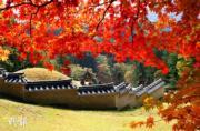 韓國紅葉:京畿道 Gwangneung