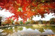 韓國紅葉熱點:首爾景福宮