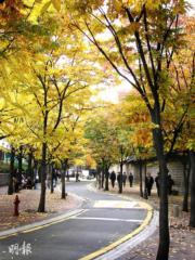 首爾三清洞路
