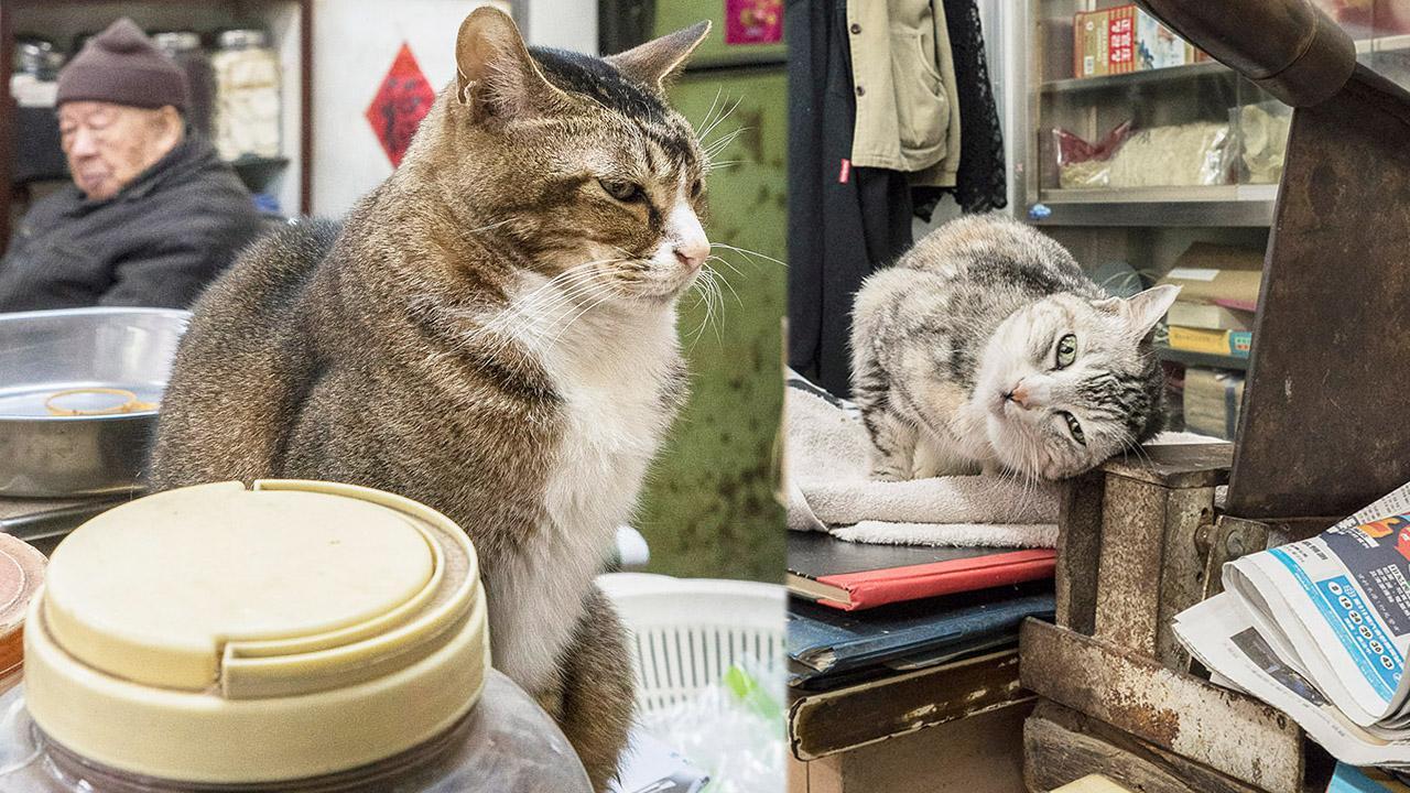 鏡頭下「香港舖頭貓」生活點滴