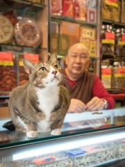 (credit:Marcel Heijnen, 'Hong Kong Shop Cats' # (nr), Hong Kong 2016 Courtesy of Blue Lotus Gallery, Hong Kong)