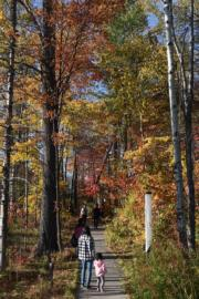 長白山周邊各景區陸續進入秋季。(新華社)