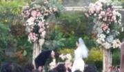 感動的婚禮。(網上圖片)