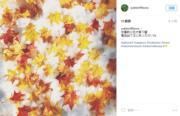 2016年(網民yukiko115sora Instagram截圖)