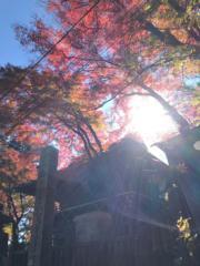 【日本紅葉】高尾山是賞紅葉勝地之一。