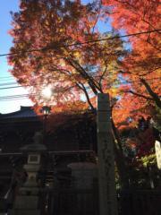 【日本紅葉】高尾山