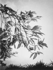 繁枝茂葉。(圖片及資料由香港社會發展回顧項目提供)