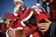狗狗都打扮成聖誕老人(法新社)
