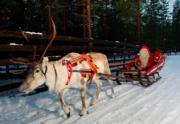 芬蘭羅凡尼米,聖誕老人坐在由馴鹿拉動的雪橇。(法新社)