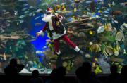 加拿大多倫多Ripley's Aquarium,潛水員穿上聖誕老人服裝表演。(新華社)