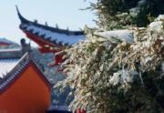 黃柏山國家森林公園內,一座古建築前的樹枝上掛滿冰雪。(新華社)
