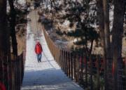 一名遊客在黃柏山國家森林公園內穿過被積雪覆蓋的吊橋。(新華社)