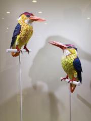 【鳥語花香──紙雕藝術展】三趾翠鳥(何芍盈攝)