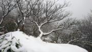大屯山積雪(陽明山國家公園facebook圖片)