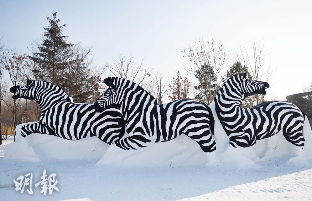 冰雪世界 黑白斑馬雪雕添生氣