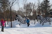 哈爾濱太陽島雪博會的雪雕「斑馬」。 (新華社)