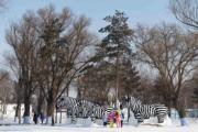 哈爾濱太陽島雪博會園區的雪雕「斑馬」。(新華社)