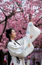3月6日,一名身著古裝的女孩在昆明圓通山公園的櫻花樹下留影。(新華社)