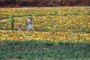 3月6日,昆明鮮花盛開,吸引遊客前往賞花。(中新社)