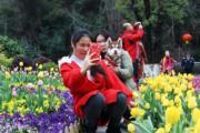 3月5日,貴州省貴陽市阿哈湖國家濕地公園內競相綻放的陽光王子、道瓊斯等21個品種萬餘株鬱金香吸引民眾觀賞。(中新社)