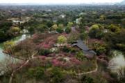3月6日,杭州西溪濕地國家公園裏種植的梅花盛開。(新華社)