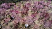 3月9日,幾對新人在江蘇揚州蜀岡西峰生態公園內拍攝婚紗照。(新華社)