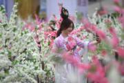 3月10日,三峽庫區巫山李花節花海觀賞季在重慶洋人街啟動,仿真李花吸引市民觀賞拍照。(中新社)