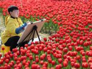 3月10日 ,浙江省溫嶺市九龍湖生態濕地公園鬱金香盛開,形成花海。 (新華社)