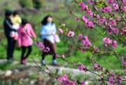 3月10日 ,遊客在福建省閩侯縣農民花卉種植創業示範基地遊覽賞花。 (新華社)